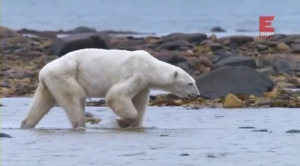 Городок полярных медведей (1-12 серии из 12)