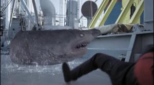 Ледяные акулы
