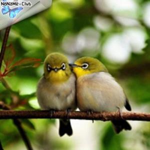 Пение птиц - Пение птиц для детей