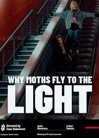 Почему мотыльки летят на свет? / Чому метелики летять на світло?