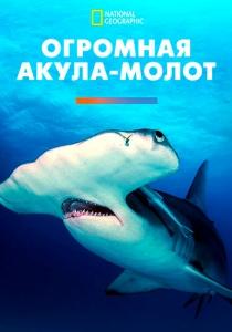 Огромная акула-молот