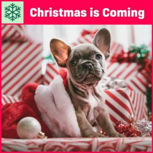 VA - Christmas Is Coming